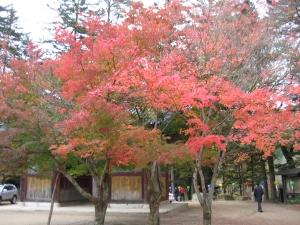 Fall foliage at Odaesan